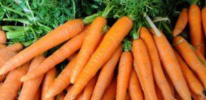 carrote-bruleurs-www.fatakat-ar.com فوائد الجزر في السلطة