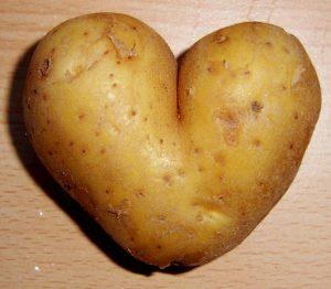 نبات البطاطس بالصور وفوائده